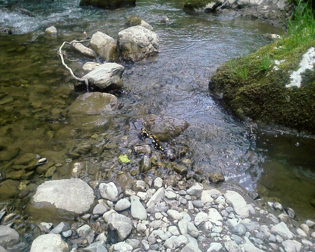 Staza za Bobovac - Salamander